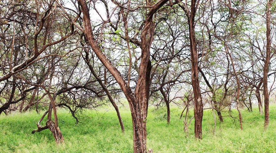 Facing Setbacks, Forrest of Trees, Maui