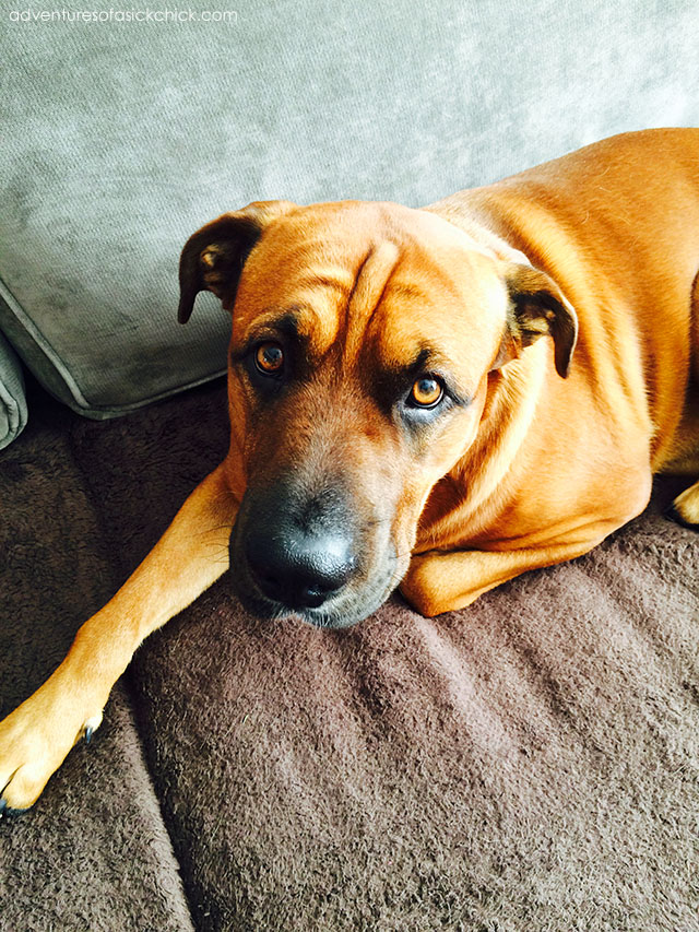 Puppy Love, Part 1: Spencer